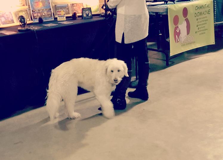 Salon du livre, du jeu et du disque de Joliette, chien